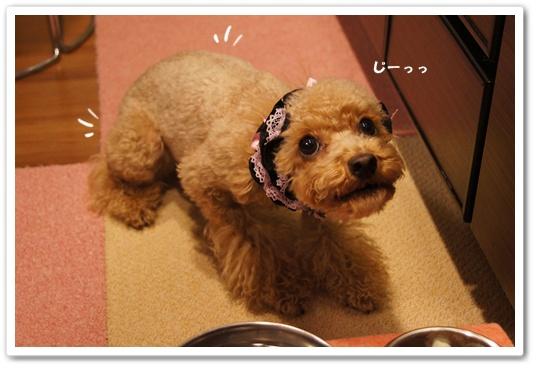 20120104yuzu1.jpg