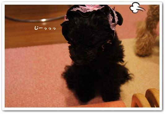 20120104yuzukosyo1.jpg