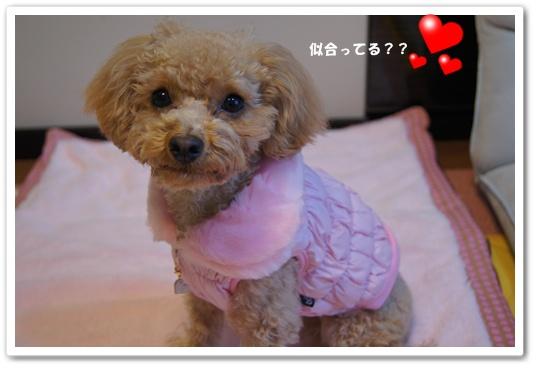 20120106yuzu1.jpg