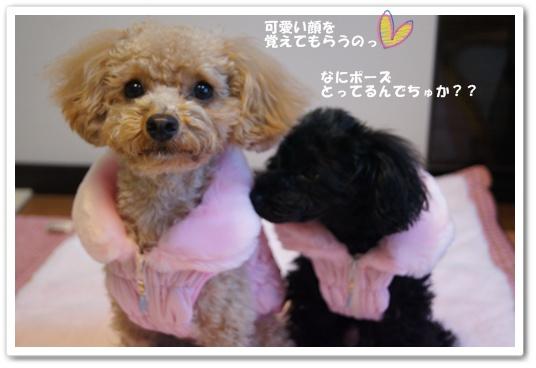 20120106yuzukosyo5.jpg