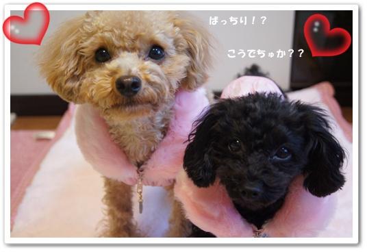 20120106yuzukosyo6.jpg