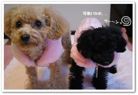 20120106yuzukosyo7.jpg