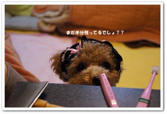20120109yuzu1.jpg