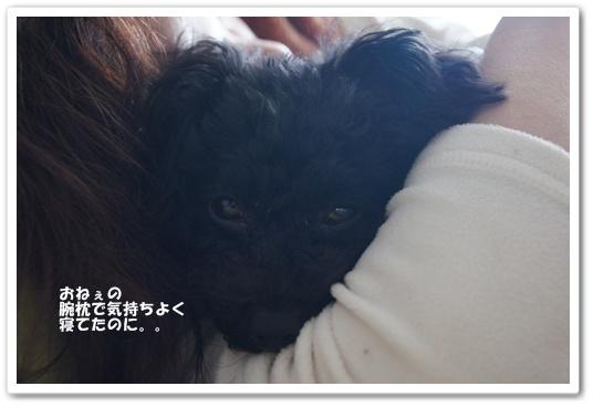 20120110kosyo2.jpg