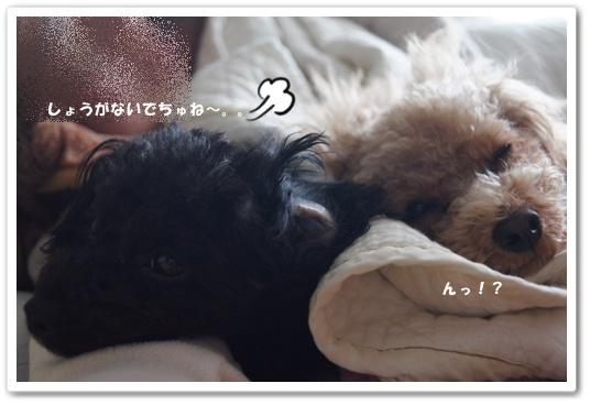 20120110yuzukosyo2.jpg