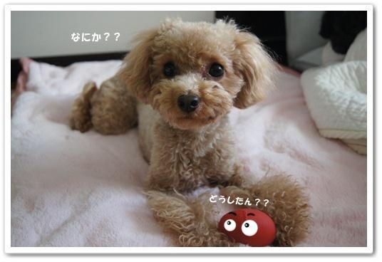 20120113yuzu1k.jpg