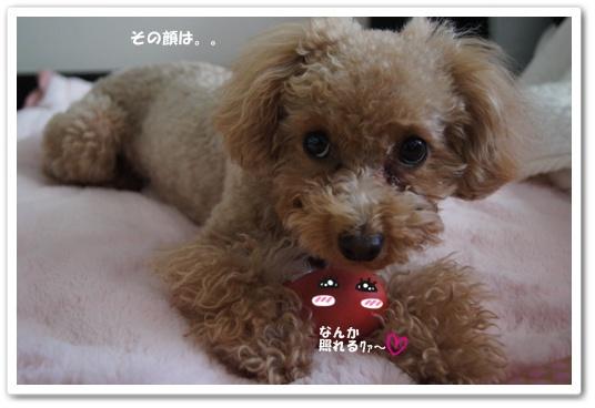 20120113yuzu2k.jpg