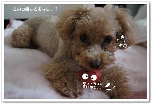 20120113yuzu3k.jpg