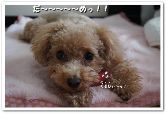20120113yuzu4k.jpg