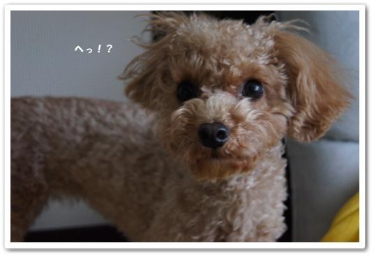 20120119yuzu2.jpg