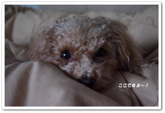 20120122yuzu1.jpg