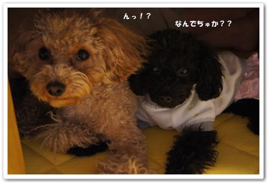 20120127yuzukosyo1.jpg