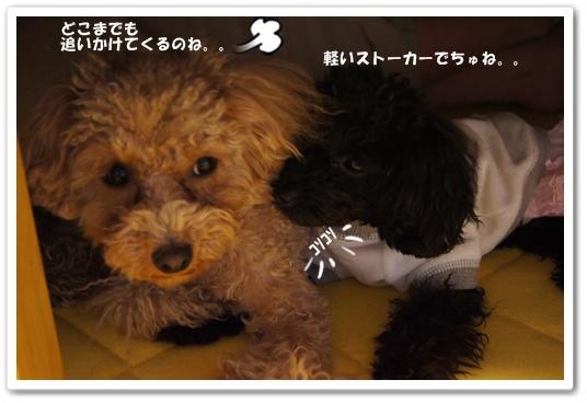20120127yuzukosyo2.jpg