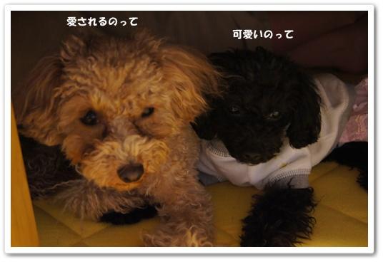 20120127yuzukosyo3.jpg