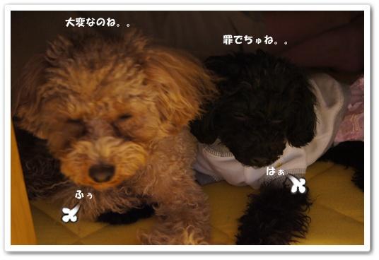 20120127yuzukosyo4.jpg