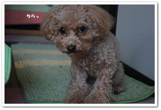 20120129yuzu2.jpg