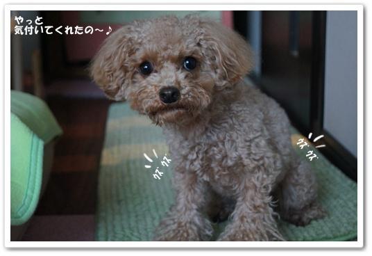 20120129yuzu3.jpg