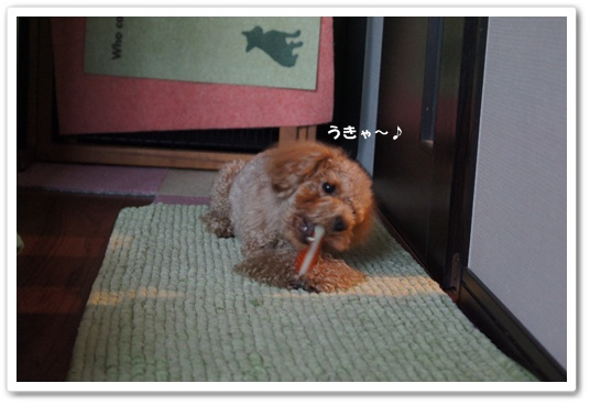 20120129yuzu6.jpg