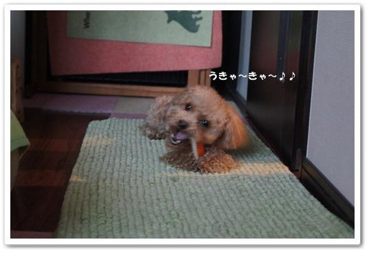 20120129yuzu7.jpg