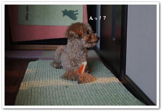 20120129yuzu8.jpg