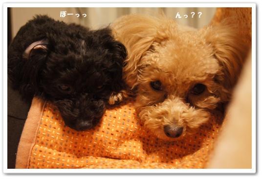 20120131yuzukosyo1.jpg