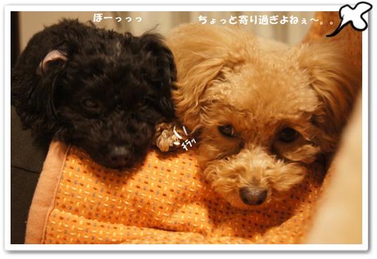 20120131yuzukosyo2.jpg