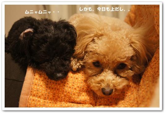 20120131yuzukosyo3.jpg