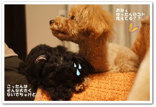 20120131yuzukosyo5.jpg