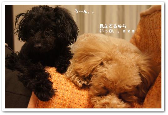 20120131yuzukosyo6.jpg