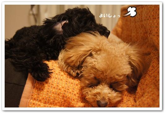 20120131yuzukosyo7.jpg