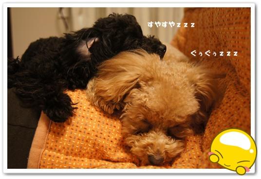 20120131yuzukosyo9.jpg