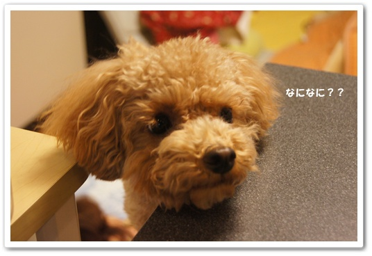 20120202yuzu1.jpg