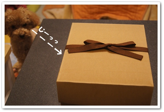 20120202yuzu2.jpg