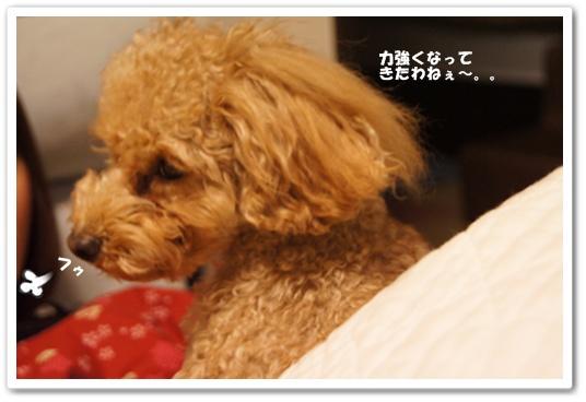 20120205yuzu2.jpg