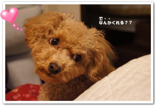 20120205yuzu3.jpg