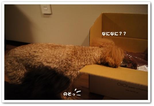 20120205yuzukosyo1k.jpg