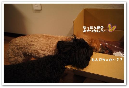 20120205yuzukosyo2.jpg