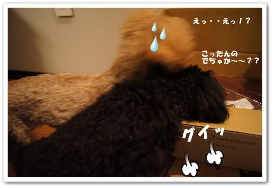 20120205yuzukosyo3.jpg
