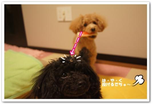 20120217yuzukosyo3.jpg