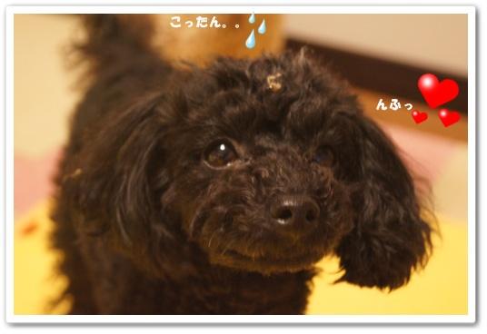 20120217yuzukosyo4.jpg