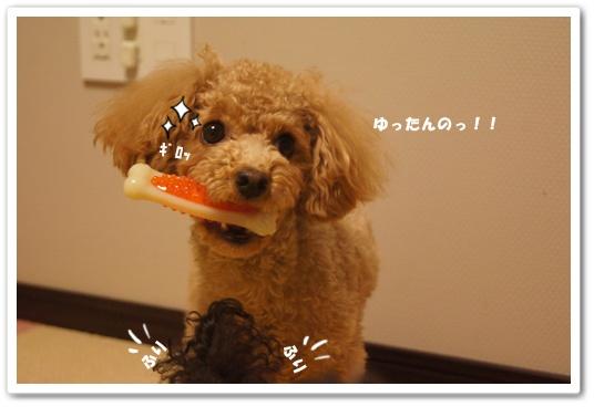20120217yuzukosyo5k.jpg