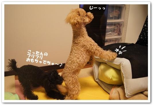 20120229yuzukosyo3k.jpg