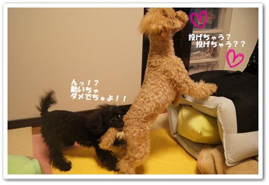 20120229yuzukosyo4.jpg