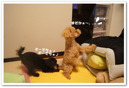 20120229yuzukosyo5.jpg