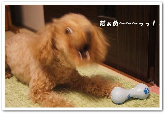 20120302yuzu4.jpg