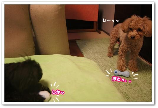 20120302yuzukosyo1.jpg