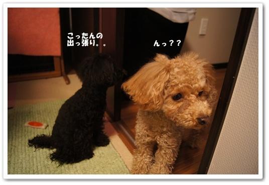 20120302yuzukosyo2k.jpg