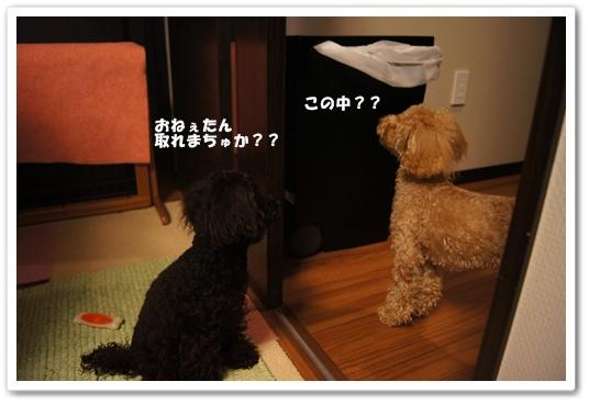 20120302yuzukosyo3.jpg