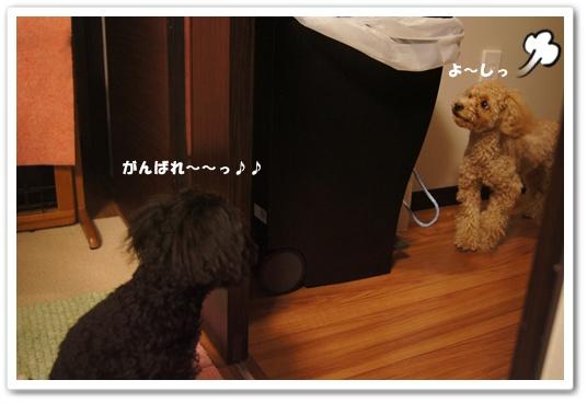 20120302yuzukosyo4.jpg