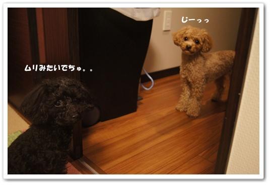20120302yuzukosyo5.jpg
